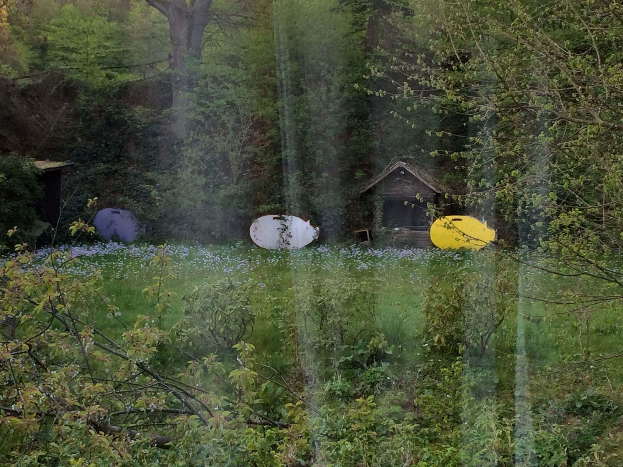 Glücksschweine-Kloster-Schweinheim.wandern&achtsamkeit